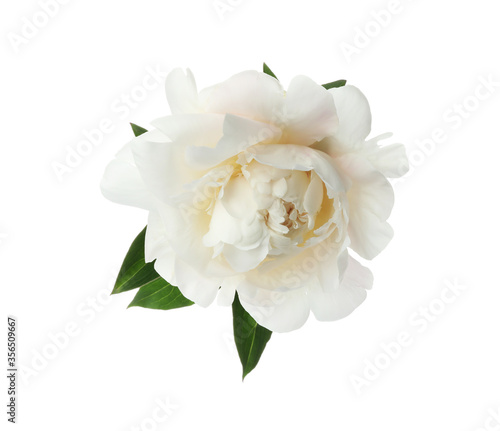 Fototapeta Beautiful fragrant peony flower isolated on white obraz