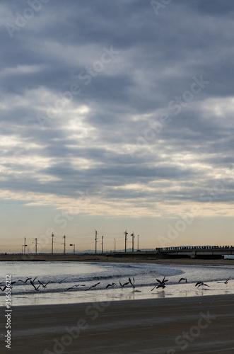飛び立つ鳥と海の風景
