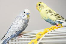 Light Blue Male And Yellow And...