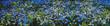 Leinwandbild Motiv Summer countryside landscape. Alpine herbs, grass in foreground. Many blue flowers. Sunny day in fresh air