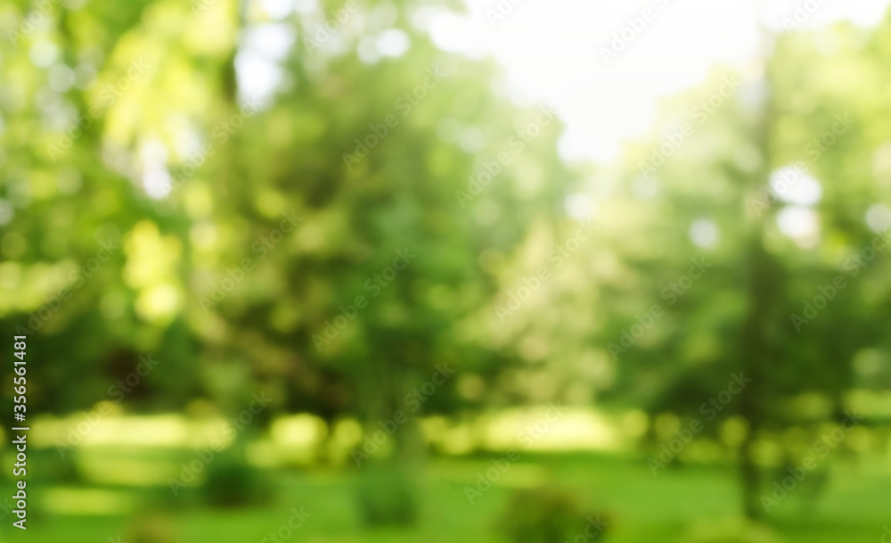 Fototapeta Blur defocused park garden tree in nature background