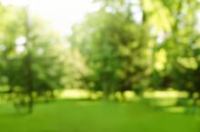 Blur Defocused Park Garden Tree In Nature Background
