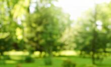 Blur Defocused Park Garden Tre...