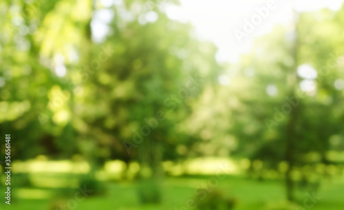 Blur defocused park garden tree in nature background - 356561481