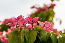 Beautiful Red Dogwood Flowers ...