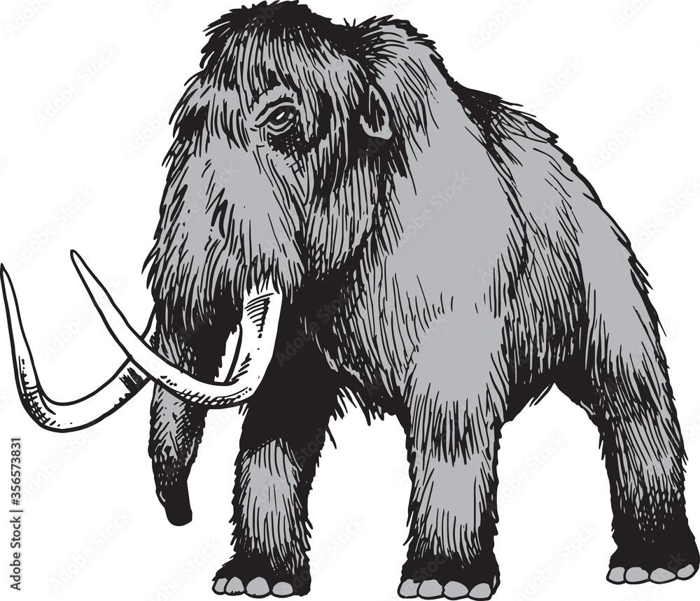 Fototapeta Mammoth in cartoon style isolated on white background.
