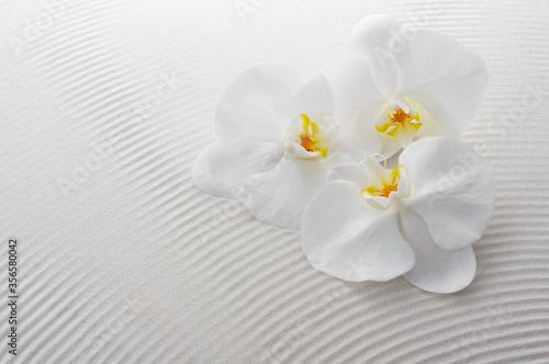 Fotografia, Obraz 胡蝶蘭と白砂
