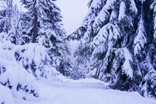Winter Path In Winter Forest L...