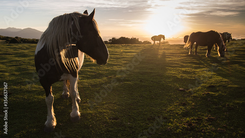 Fototapeta Troupeau de chevaux obraz