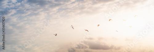 Carta da parati Flock of birds on sunbeam twilight cloud sky sunrise