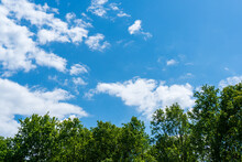 Green Tree Top Line Over Blue Sky And Clouds Background In Summer