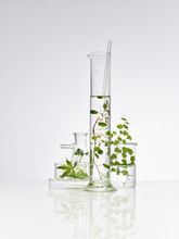 Plants And Leaves In Laboratory Equipment