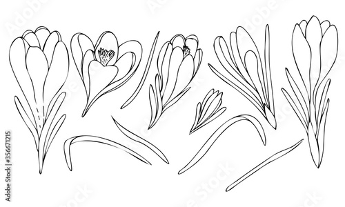 Leinwand Poster vector set black and white botanical element, wildflowers and garden flowers - c