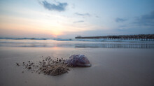 The Jellyfish On The Beach And...