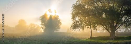 Obraz Bäume im Sonnenaufgang mit Nebel - Panorama - fototapety do salonu