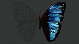 half coloured butterfly on grey background