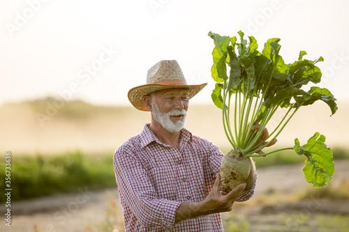 Photo Farmer with sugar beet in field
