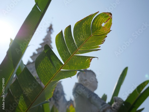 green leaves on a blue sky