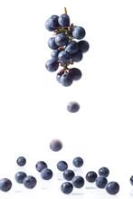 巨峰の房からこぼれ落ちる果実
