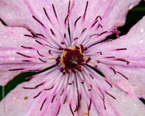 Fototapeta Kwiaty macro makro rośliny różne  obraz