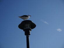 Street Lamp On Blue Sky With Seagull