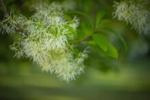 Natural Wild Flower Plant