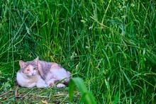 Cat Lies In Green Grass