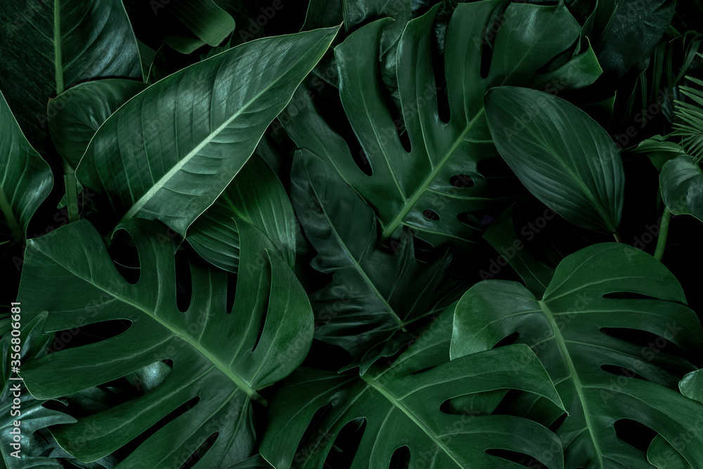 Fototapeta Creative tropical green leaves plam monstera and fean layout. Nature spring concept. Flat lay.