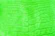 canvas print picture - Genuine Large Alligator Upper Belly Leather. Chrome Green. 50cm Width.