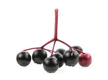 Small Branch Of Black Elderberry Fruit On A White Background. European Black Elderberry.