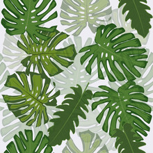 Design Tropical Foliage Vectors Wallpaper Seamless Pattern On Translucent Background