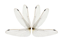 Wings Isolated On White