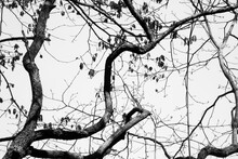 Tree Limbs And Sky