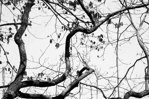 Tree limbs and sky Fototapeta