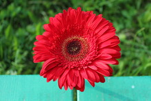 Big Red Flower On A Green Background. Top And Side View