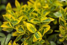 Bright Yellow Green Plant Close Up