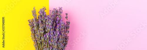 Fototapeta Blooming purple lavender, on yellow pink background obraz