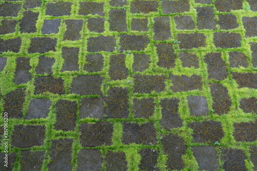 Tablou Canvas A patio constructed with stone pavers with green moss growing in the joints