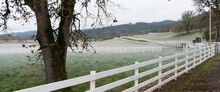 An Oak Tree And White Rail Fence On A Horse Ranch On A Foggy Morning South Of Salem, Oregon.