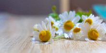 Posy Of White Daisies With Vibrant Yellow Disk Florets Laying Casually On Wooden Slated Table In Outdoor Setting