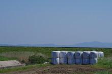 牧場と牧草