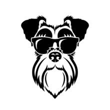 Black And White Schnauzer Dog ...