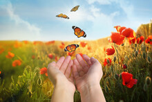 Woman Releasing Butterflies In Field On Sunny Day, Closeup. Freedom Concept