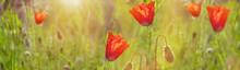 Wildflowers Poppies. Beautiful...