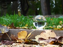Close Up Shot Of A Clear Crystal  Ball In Autumn Leaves