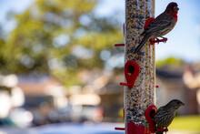 Birds Eating Out Of A Bird Feeder