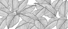 Hand Drawn  Leaves Line Arts I...