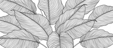 Hand Drawn  Leaves Line Arts I...
