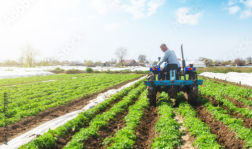 Fotografija A farmer on a tractor loosens the soil and removes weeds on a potato plantation