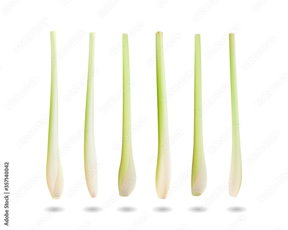 Fototapeta lemongrass. Realistic vector illustration, 3d